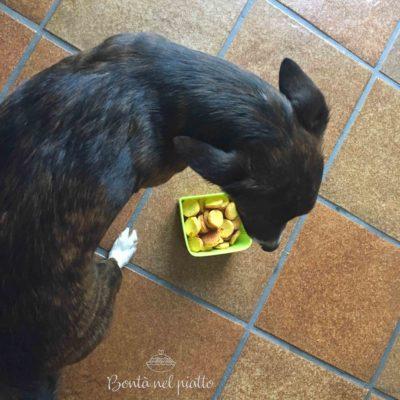 Biscottini alle carote per cani